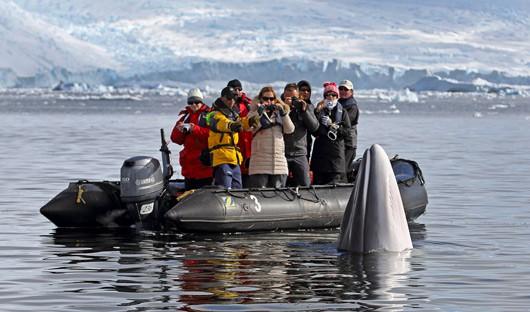 Hebridean Sky Antarctica-xxi