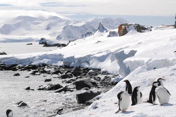 Chinstrap & gentoo penguins Antarctic Peninsula Antarctica Travel Centre