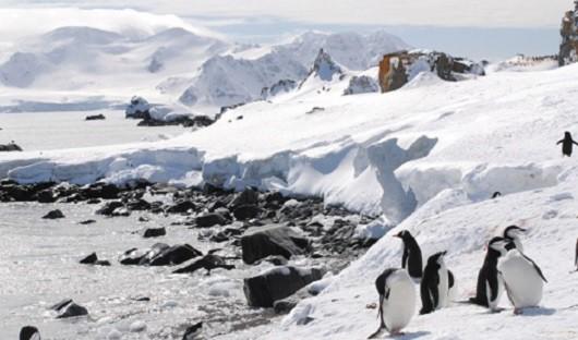 chinstrap-gentoo-penguins-on-antarctic-peninsula