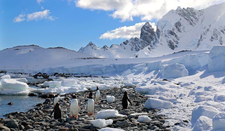 Cuverville Island Antarctica