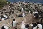 falkland-islands-small-for-accord