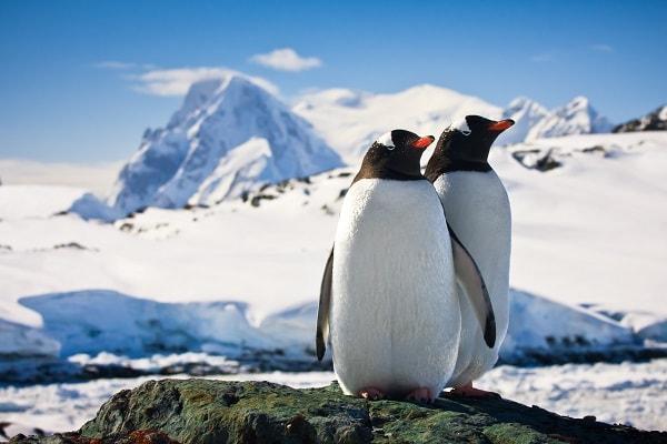 Gentoo penguins Antarctic Peninsula Antarctica Travel Centre