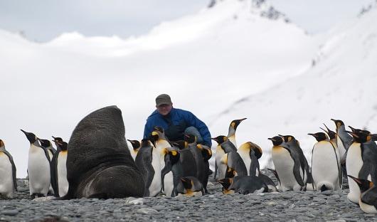 King Penguins on beach South Georgia Anatrctica Travel Centre Alex Burridge