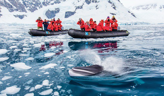 "An up-close encounter with a ""stinky minke."" Paradise Bay, Antarctica."