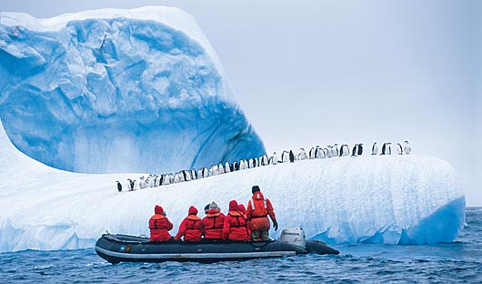 nat-geo-chinstrap-penguins