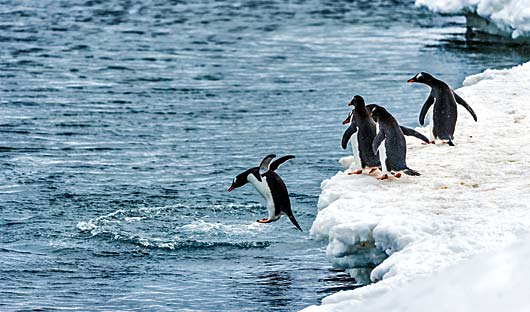 penguins-in-antarctica
