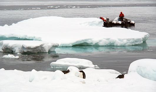 zodiac-penguin