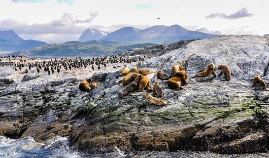 Beagle Channel Shutterstock