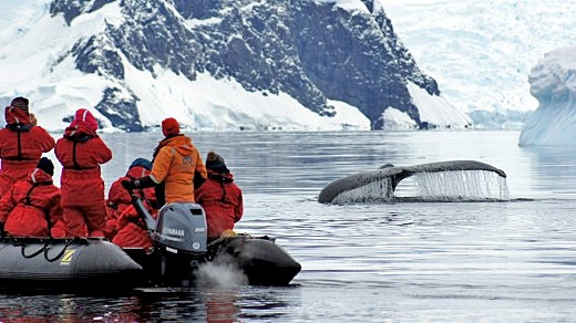 craig-platt-whales