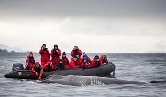 marine-mammals-voyage-antarctica-whale