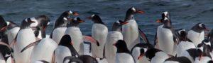 Penguins Antarctica Specials