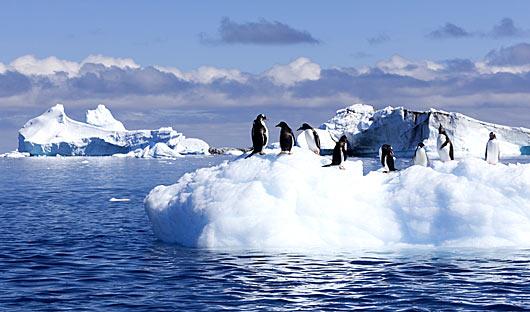 penguins-on-ice