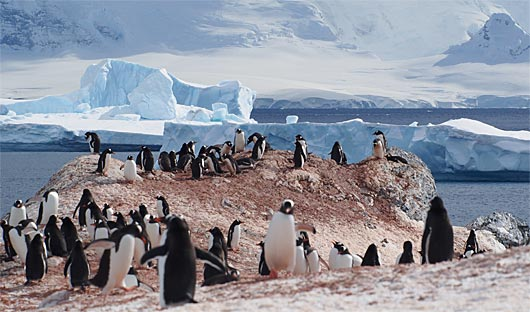 Visit penguin colonies on a typical day on an Antarctica cruise
