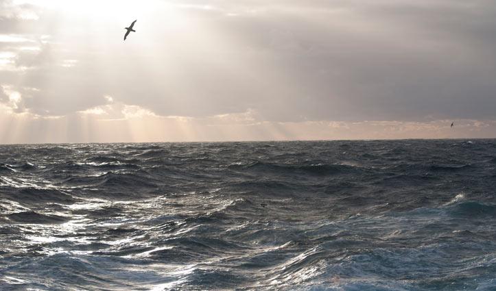 Albatross at Sea