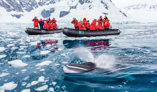 mike whale paradise bay Antarctic Peninsula national geographic explorer