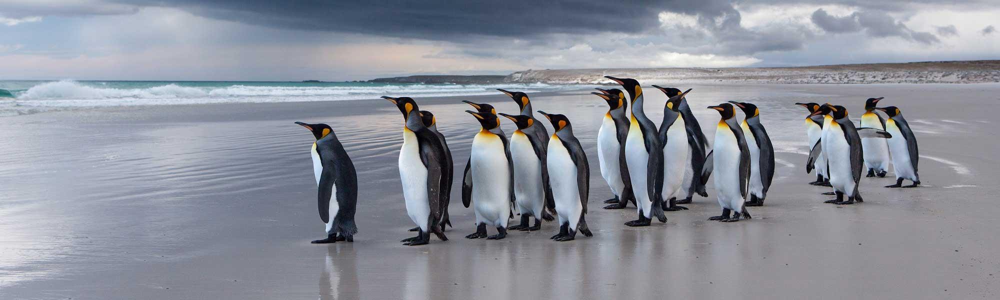 Amazing Wildlife Encounters