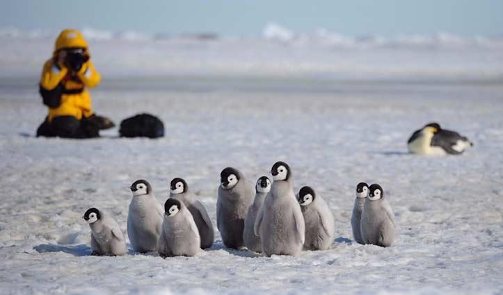 Photography Emperor Penguin