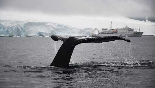 humpback whales Jack Burridge