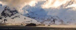 Antarctica-Hero