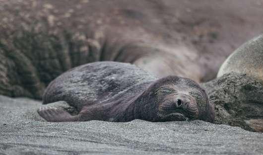 Quark Seal