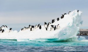 shutterstock_Antarctica_117956401_resized
