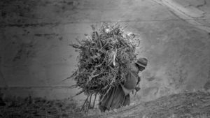 Woman With Hay by Andrew Moig