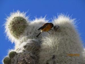 Cactus & Finch Uyuni Salt Flats, Fish Island, Peru by Marian Harris
