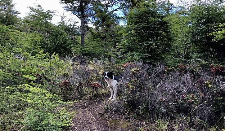New Hiking companion at Gable Island