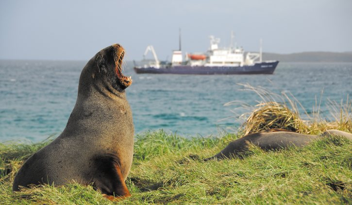 Heritage Expeditions - Spirit of Enderby - Sub Antarctic Islands