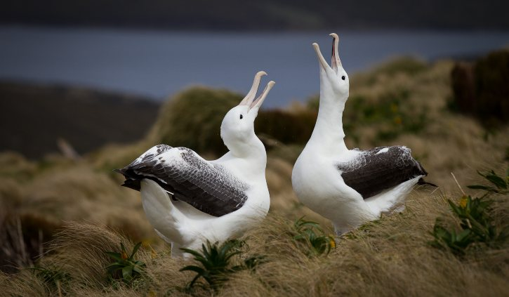 Royal Albatross Heritage Expeditions