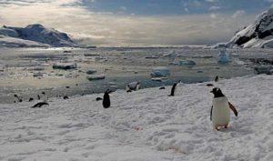 Neko Harbour Antarctica