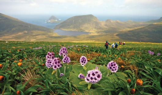 Heritage Expeditions - Mount Honey, Campbell Island
