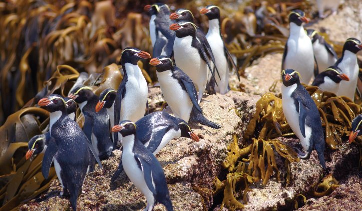 Heritage Expeditions - Sub Antarctic Islands - The Snares