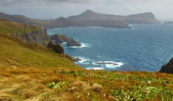 Heritage Expeditions - Grey Headed Albatross