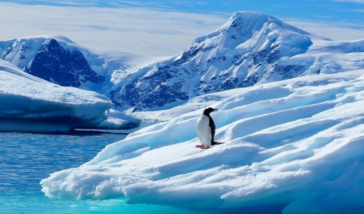 Lone penguin antarctic peninsula by emma magrath