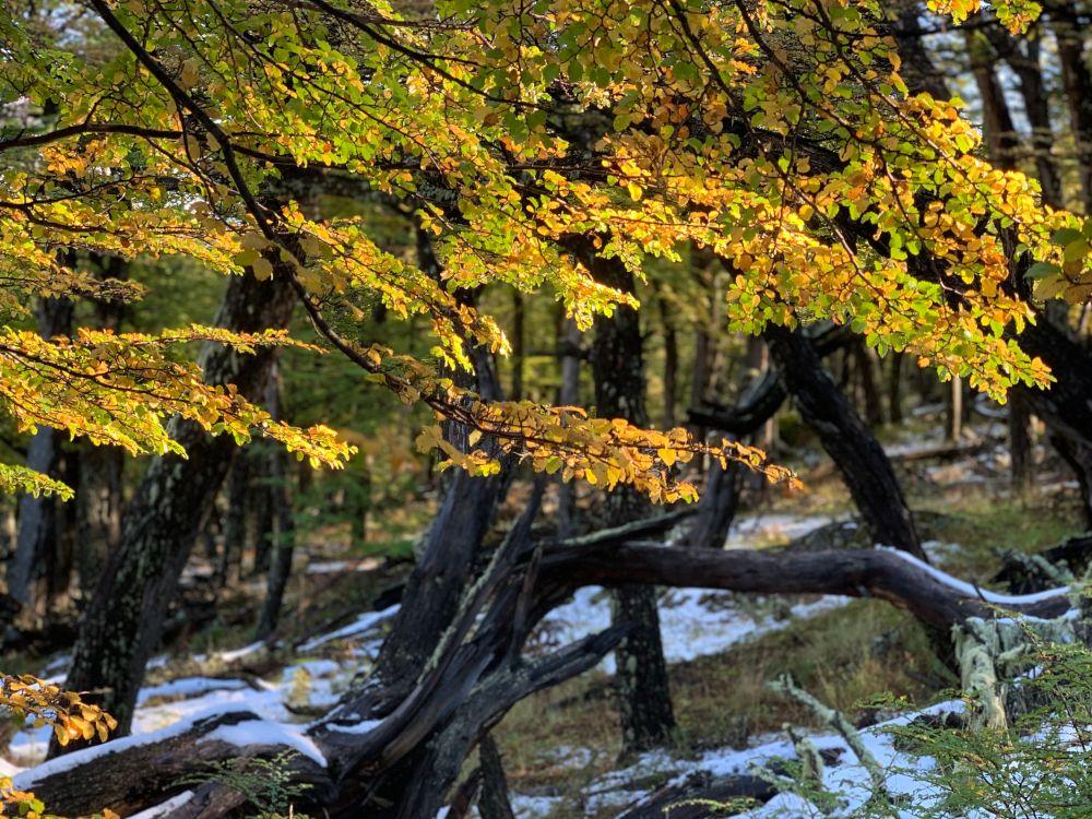 Patagonian Flora by Vikki Oates