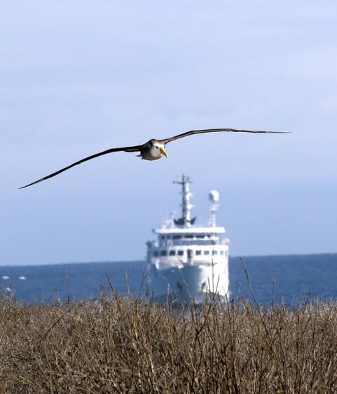 Albatross by Carrie GordonAlbatross by Carrie Gordon
