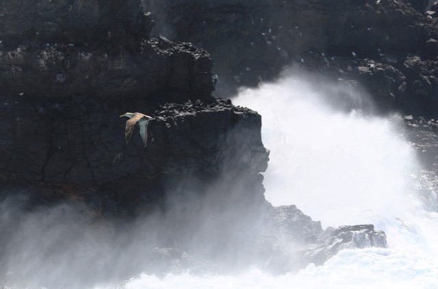 Bird in flight by Carrie Gordon