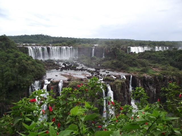 Iguazu Falls with Flowers by Alison Duncan