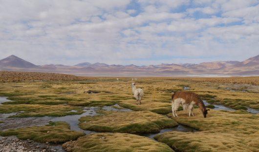 Bolivian Altiplano by Doug Dickson