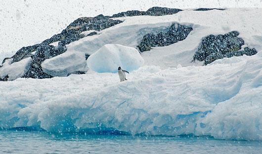 Cierva Cove Antarctica Polar Latitudes