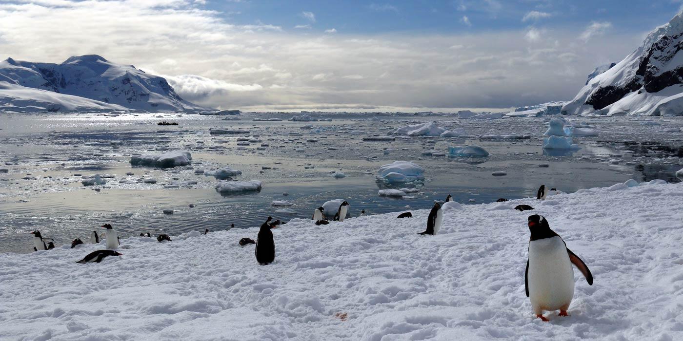 Nekko Harbour Antarctica Penguin