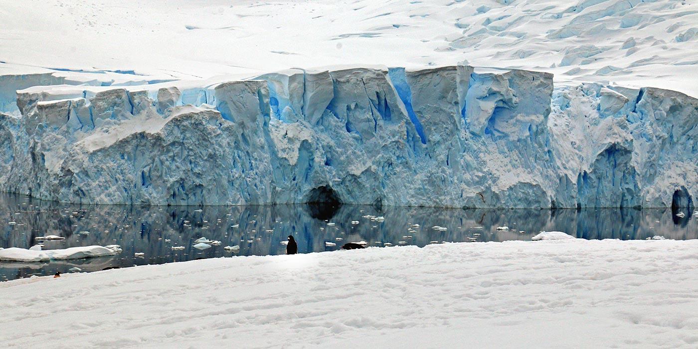 Neko Harbour Penguin Standing at Glacier