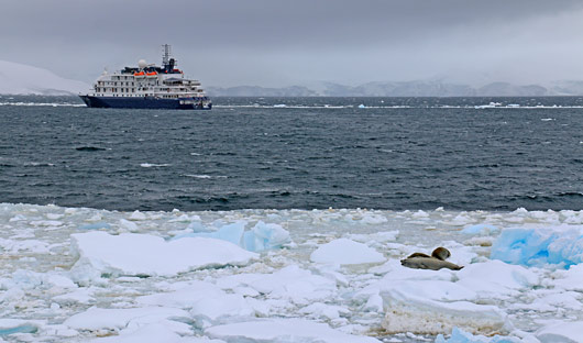 Seal at Port Lockroy