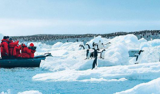 Hanseatic Inspiration Zodiac, Penguins