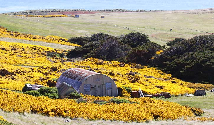 Falkland Islands, West Point Island