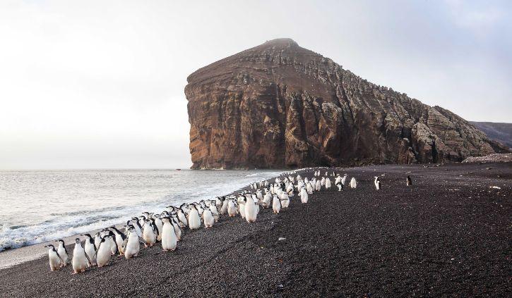 Ponant, Chinstrap Penguins