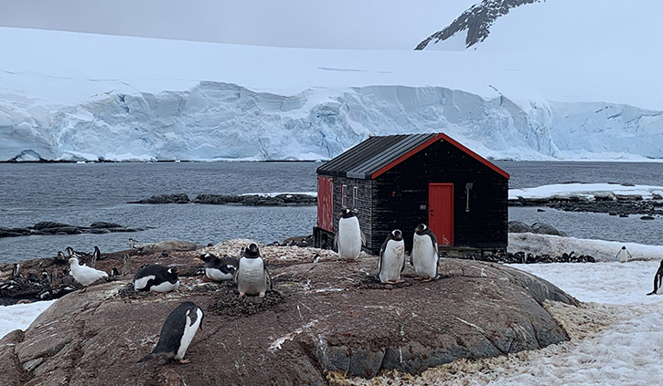 Penguins at Brown Bluff