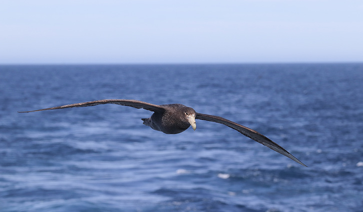 Bird on the Scotia Sea