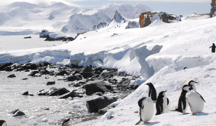 Chinstrap Gentoo Penguins on the Peninsula